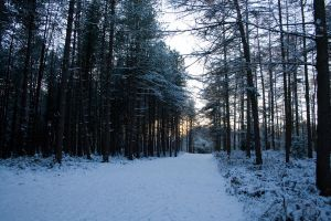 Snowy Woodland 8 by joannastar-stock