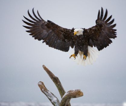 The Eagle is Landing by themobius