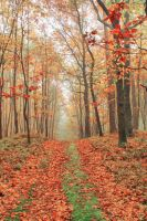 Colourful forest by agstef