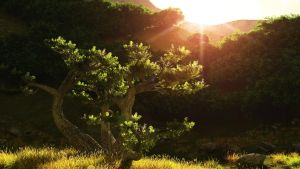 Tree by magicclam