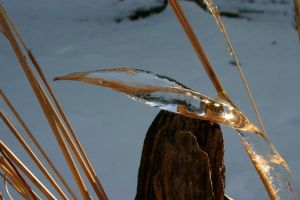 Ice forms on wheat by Yawnboyfilms