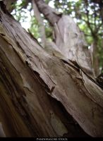 Wood Texture 13 by AnitaJoy-Stock