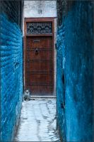 A cat-filled allayways of Morocco by macu