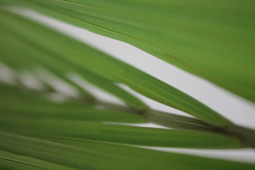 Leaves | Abstract photo by josemiguels