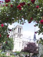 The Roses of Paris by vifetoile