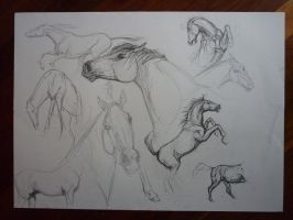 Horse Sketches 2 by Montaneous
