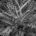 Fern2 by nomad666