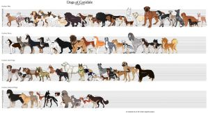Dogs of Canidale: Height Chart by Tazihound