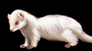 Ferret by ItsCarmenJones
