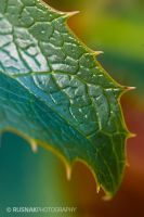 Textured Leaf by snak