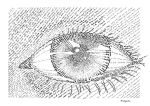 Eyes according to Wikipedia by fifthdimensional