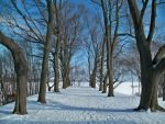 Snowy Tree-Lined Path by da-joint-stock