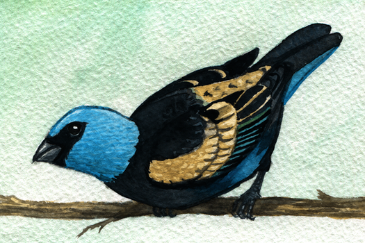 Blue-necked Tanager by twapa
