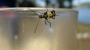 Bug on a glass by TortueBulle