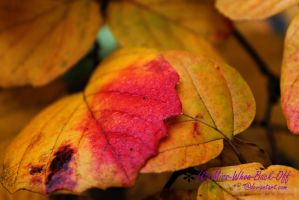 Autumnal Transformation by Miss-Whoa-Back-Off