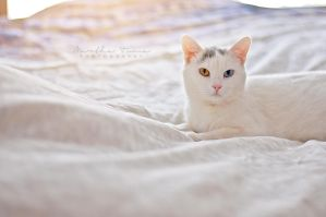 Winnie the Heterochromic Kitty VII by MarthaTuma