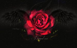 dark angel rose by KateKatnisspage