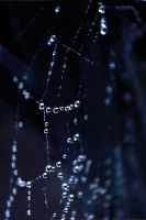 Spider Web by misscreave