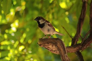 Backyard Bird by VileYonderboy