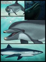 a Wholphin's journey - P 01 by namu-the-orca