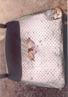 chair with dead moth by exotica