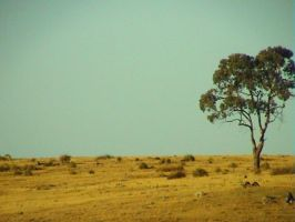 Sunburnt Country by Rotae