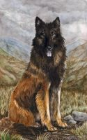 Tervuren watercolor study by Annushkathesetter