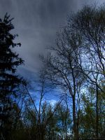 Trees and Clouds HDR by carbyville