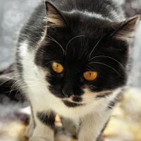 Yellow-eyed by Biljana1313
