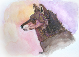 Lonely Song Watercolor by InstantCoyote