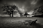 The Old Orchard by DREAMCA7CHER