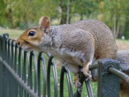 Squirrel by Nalek
