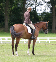 Dressage stock 19 by ByMelody