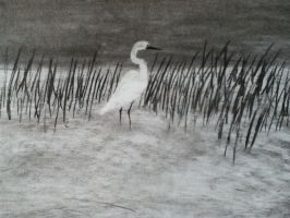 Great Egret by CdQ-14