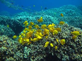 Yellow on the Reef by X5-442