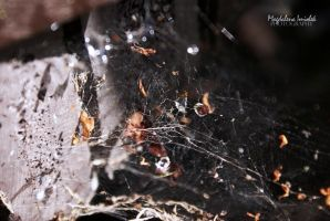 spider's web by FairyOfLuck
