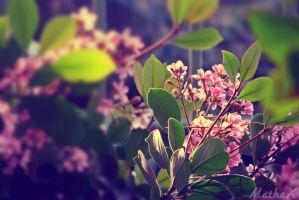 Flowers by TLL-MatheX