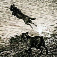 When Dogs Could Fly by clippercarrillo