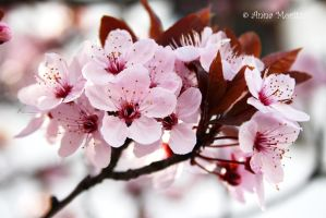 Spring bloom by annamnt