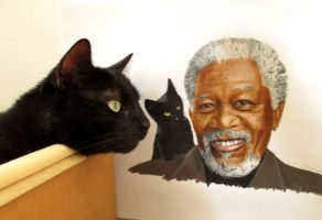 My Cat Krimi with our colored pencil drawing by JasminaSusak
