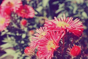 Pink Flowers III by LilP0p