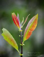 Colourful leaves. by SallokcaB