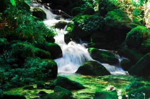 Pure Spring Water by bleaches