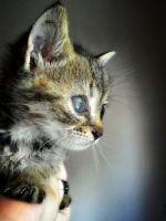 A kitten's wish. by Catist