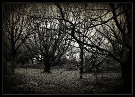 naked trees by awjay