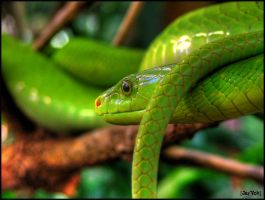 Green Mamba by jayvoh