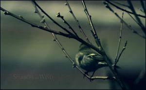 . :The Sparrow and The Wind: . by kharax