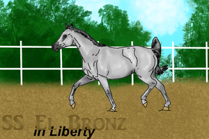 SS El Bronz - Show = Liberty by Starcather9