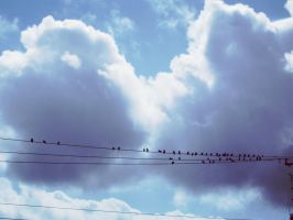 Wires, clouds and birds. by editordistriktmag