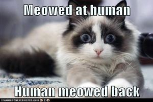 Meowed at human... by The-Bad-Chick